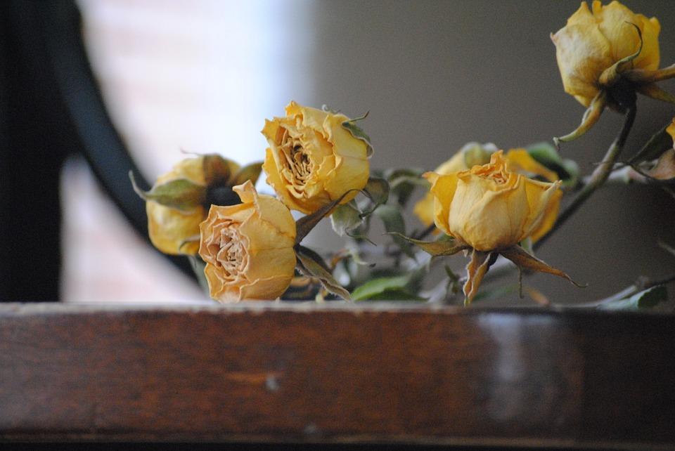 rose-666574_960_720